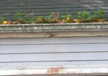 Moss Removal Three Counties Roofing